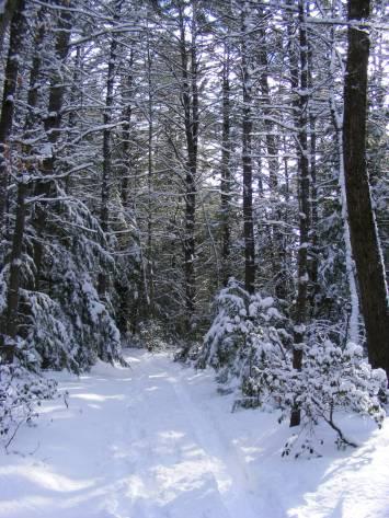 Wapack Trail on Barrett Mountain in New Ipswich. Fresh powder for my snowshoe hike.