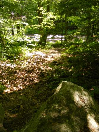 South Branch is visible through the woods, all along the trail.