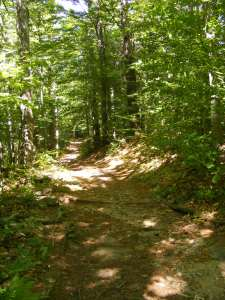 Pumpelly Trail: first, the woods walk