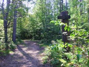 One-Mile Trail, Bear Brook SP (Ellen Kolb photo)