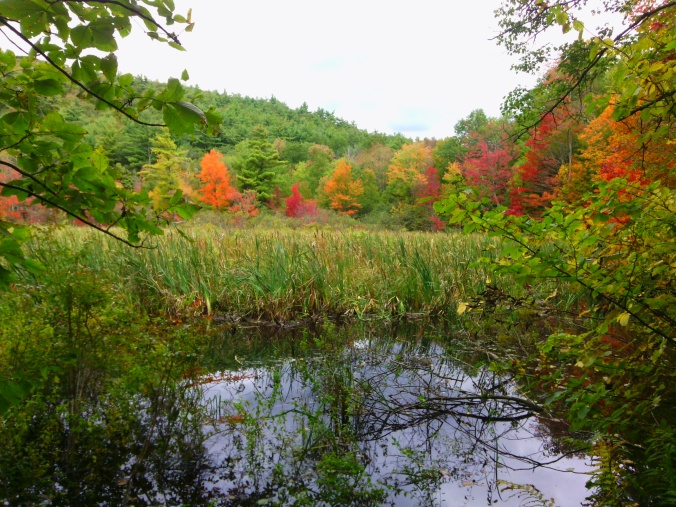 First fall colors at the edge of wetlands on Tower Road.