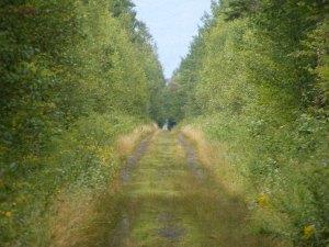 Presidential Rail Trail, leading to Cherry Pond
