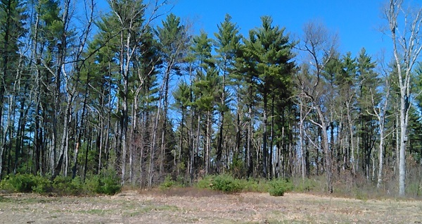 woods at Wildcat Falls