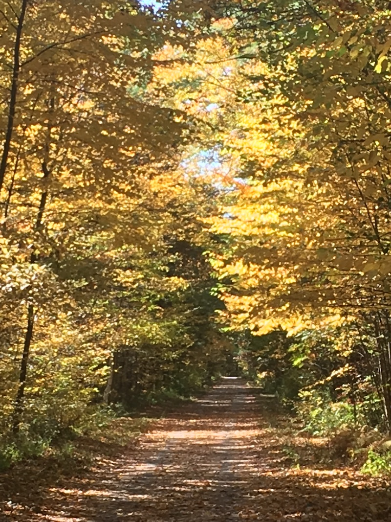 rail trail in autumn